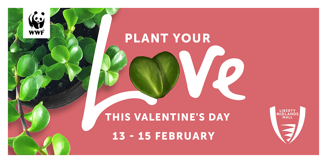 Plant Your Love Spekboom